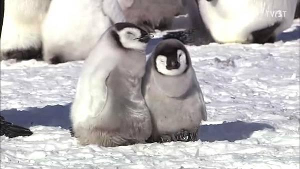 小企鵝.jpg