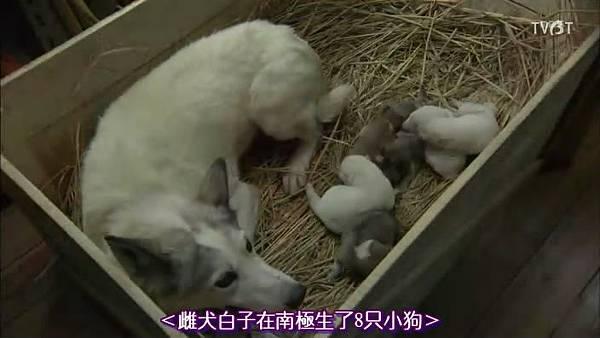 6-2小犬出生3.jpg