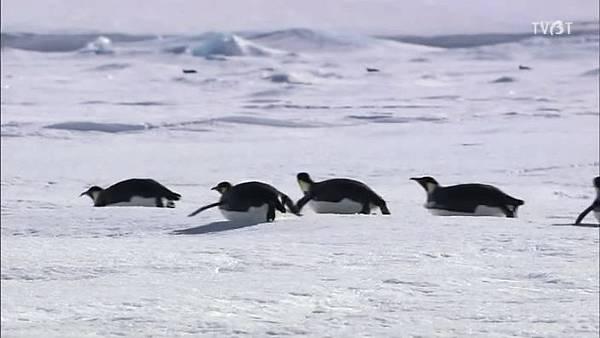 企鵝群2.jpg