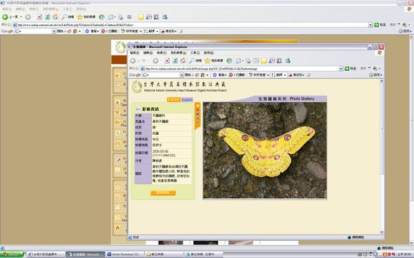 蝴蝶2.jpg