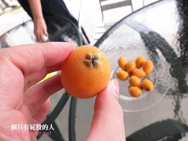 0金土咖休閒果園013
