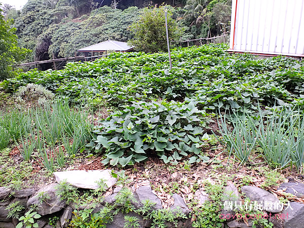 6綠野仙蹤植物精油專賣店17