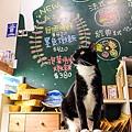 台北貓咪先生的朋友09.jpg