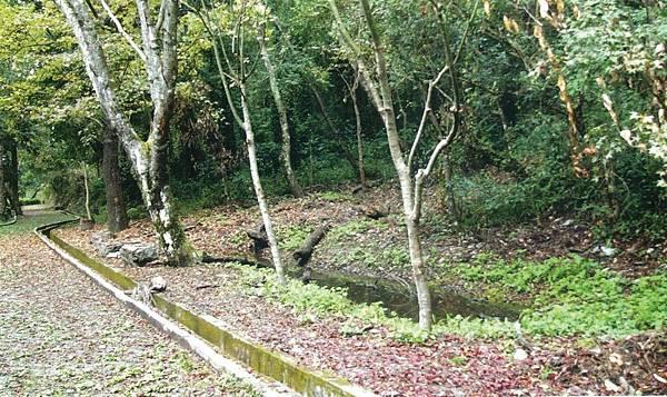 林下池.jpg