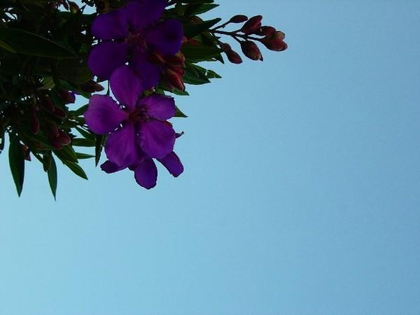 家門口紫色花朵