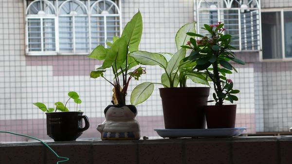 守護陽台的植物
