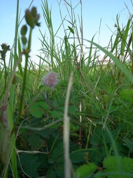 像草一樣往太陽方向生長