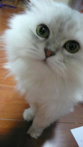 世上最可愛的貓