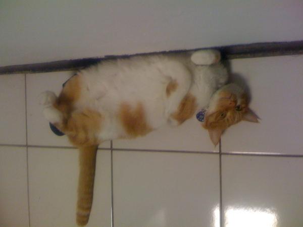 認識可愛的貓