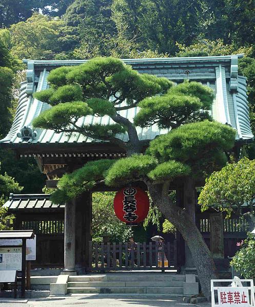 0914-82離開前才發現寺前這個松樹好日本味..ㄎㄎ.JPG