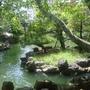 0410-43第二個景點福州園.JPG
