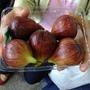 0663-這是大嫂買的不知名水果.JPG