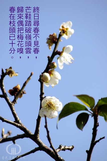 春十分2.jpg