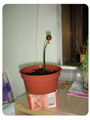 種了快4個月