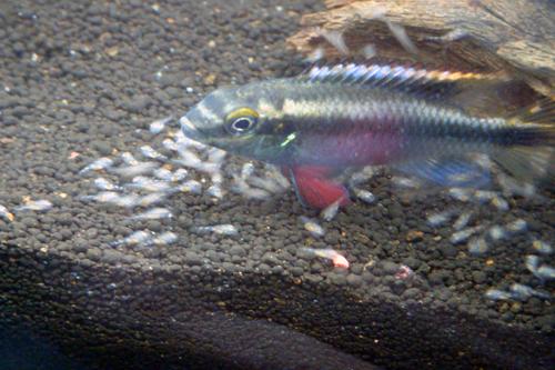 開始有些小魚不遵守秩序愛亂跑