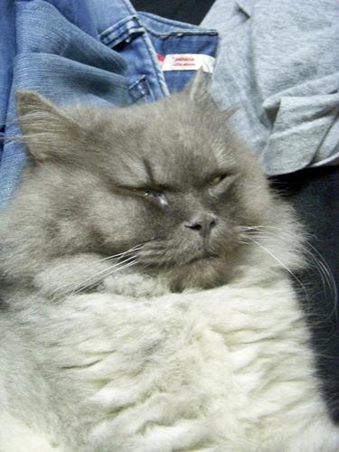 梅森睡覺翻白眼