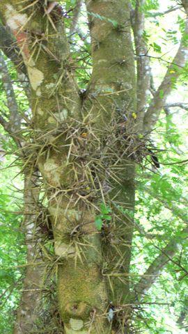 奇怪的樹之二