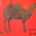 兩個駝峰的駱駝,牠的大便就是兩個峰
