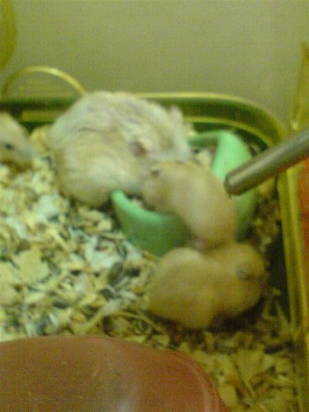 娜美和小朋友們2.JPG