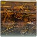 阿布籽*天然有機香草浸泡油-天竺葵