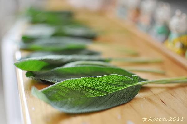 ●晾乾鼠尾草●