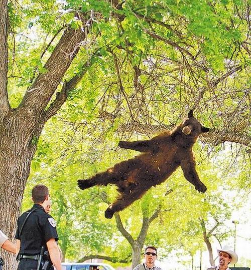 黑熊漂浮照