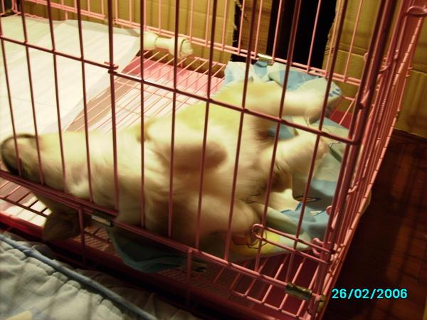 睡覺的姿勢很可愛.JPG