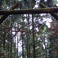 綠光森林1.jpg