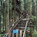 綠光森林10.jpg