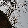 錦鋰湧水街-街景.jpg