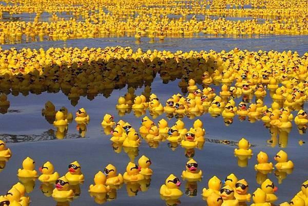 黃色小鴨_行程表