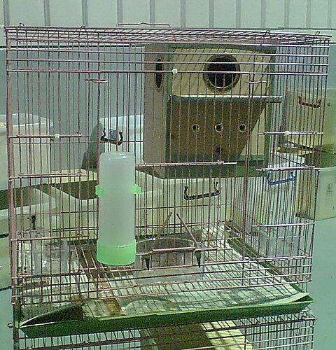 蜜袋鼯鼠換籠子之後居住環境。