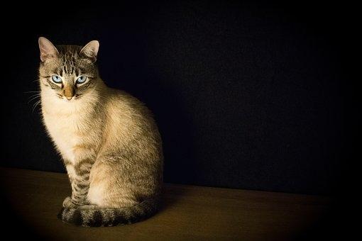 cat-2590467__340.jpg