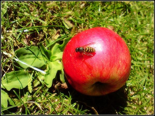 Apple☆Apple