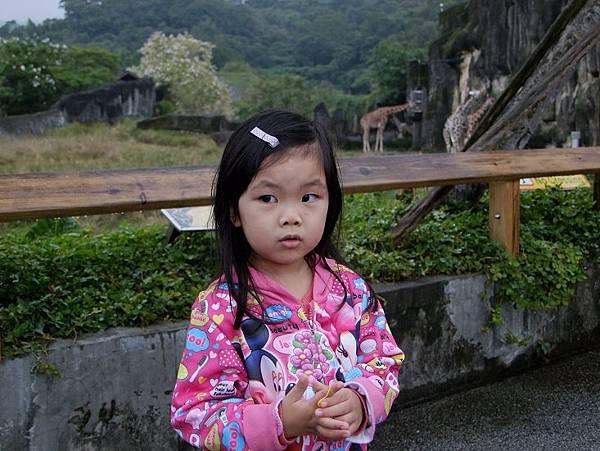 2014-11-12搭完覽車來動物園看動物