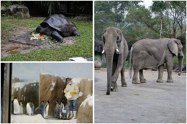 2014-11-12看動物