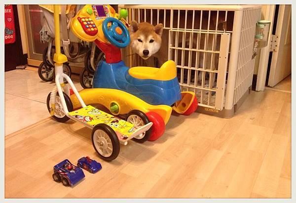 妞妞的車車