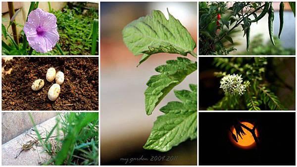 my garden 2009-2011-a