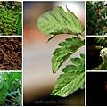 my garden 2009-2011-b