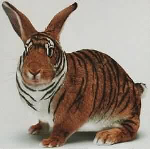 虎兔(貼錯材質的(诶.jpg
