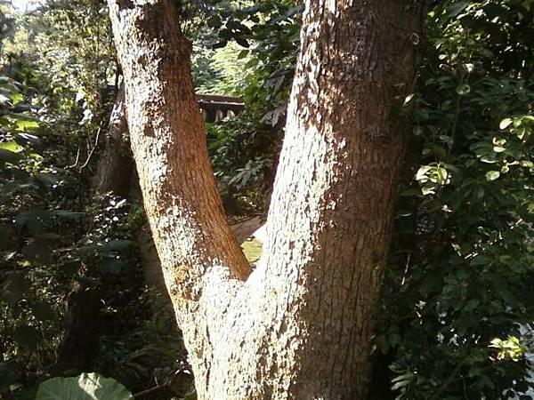 樹也想照相 真可愛XXXD