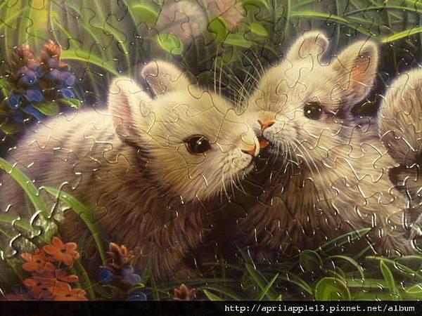 特寫-相親相愛的兔子