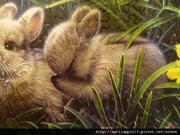 特寫-這隻洗臉的兔子超可愛