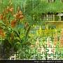 漂亮的花園