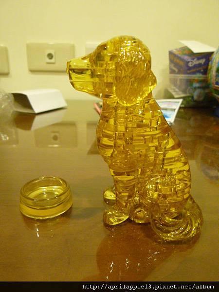 黃金獵犬側面照