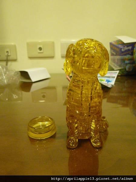 黃金獵犬正面照