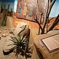 沙漠體驗區2