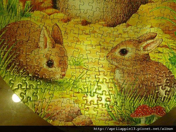 底下可愛的小兔子