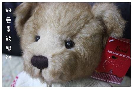 10012-Harrods跨年熊-04.JPG