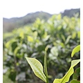 10207-日月老茶廠-13.JPG